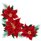 Canto do Poinsettia Foto de Stock Royalty Free