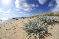 Canto Marinho beach Royalty Free Stock Image