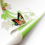 Canto verde Fotografia de Stock Royalty Free