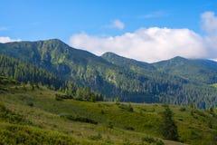 Canto verde cubierto con el bosque de las piceas en el fondo del flo Fotografía de archivo libre de regalías