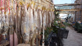 Cantonese salted fish being dried in Tai O, Hong Kong Stock Images