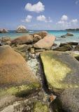 Cantos rodados con las algas Foto de archivo libre de regalías