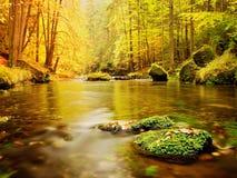 Cantos rodados con las hojas caidas Río de la montaña del otoño Hayas, arces y hojas de los abedules Imagen de archivo libre de regalías