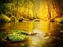 Cantos rodados con las hojas caidas Río de la montaña del otoño Hayas, arces y hojas de los abedules Foto de archivo libre de regalías
