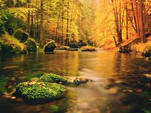 Cantos rodados con las hojas caidas Río de la montaña del otoño Hayas, arces y hojas de los abedules Fotos de archivo