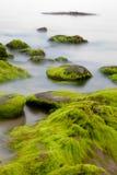 Cantos rodados cubiertos con alga marina verde en el mar brumoso Fotos de archivo