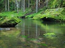 Cantos rodados cubiertos de musgo de la piedra arenisca en el agua del río de la montaña. Despeje el agua borrosa con reflexiones. Foto de archivo
