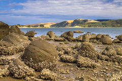 Cantos rodados de Koutu con las dunas de arena de Opononi en el contexto, Ne de la tierra del norte Imagen de archivo libre de regalías