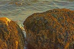 Cantos rodados de la alga marina Imágenes de archivo libres de regalías