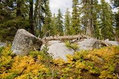Cantos rodados en bosque escénico foto de archivo libre de regalías