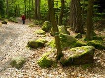 Cantos rodados en el bosque Foto de archivo libre de regalías