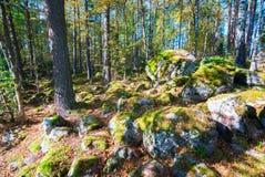 Cantos rodados en el bosque en la caída Imagenes de archivo