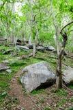 Cantos rodados en la ladera enselvada en primavera Foto de archivo libre de regalías