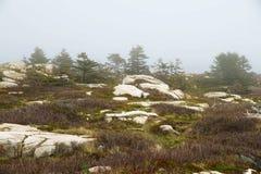 Cantos rodados en musgo e hierba seca con las coníferas derechas bajas en la niebla Fotografía de archivo libre de regalías