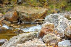 Cantos rodados en riverbank de la montaña Imagen de archivo libre de regalías