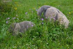 Cantos rodados enormes de las piedras en hierba verde Foto de archivo