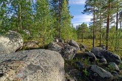 Cantos rodados grandes en el bosque septentrional Imagenes de archivo