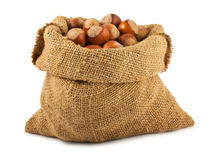 Canvas bag with ripe hazelnuts Stock Photo