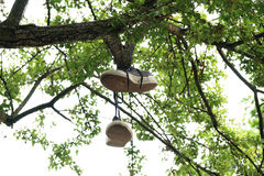 Canvas shoes hanging from tree branch Stock Images