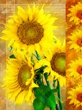 Canvas sunflowers series right stock photography