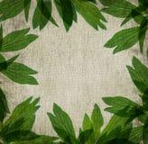 Canvas texture Stock Photos