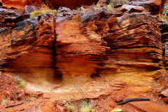 Canyon,红色中心,澳大利亚国王 免版税库存图片