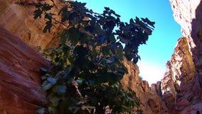 Canyon étroit plié par jaune longtemps incurvé Image libre de droits