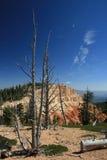 Canyon 5 di Bryce del ciclo di Bristlecone Immagini Stock Libere da Diritti