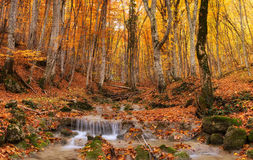 Canyon in autumn time Stock Photography