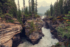 Canyon in Banff NP Royalty Free Stock Photo