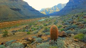 canyon and cactus Royalty Free Stock Photography