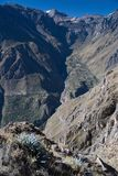 Canyon Colca in Peru. Canyon Colca in southern Peru Stock Images