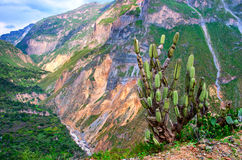 Canyon Colca, Peru Royalty Free Stock Photo