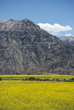 Canyon of the Colca River in southern Peru Stock Photography