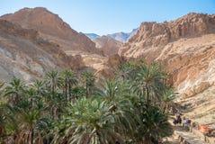 Canyon con le palme nel deserto della montagna Immagini Stock