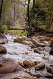 Canyon Creek in Rain Royalty Free Stock Images