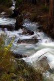 Canyon Creek Spring 2 Royalty Free Stock Photography