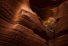 Canyon d'Antilope Images libres de droits