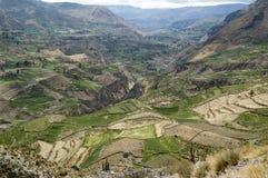 Canyon de科尔卡,秘鲁 免版税图库摄影