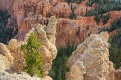 Canyon de Bryce Photographie stock libre de droits