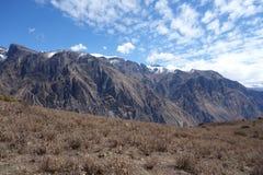 Canyon de Colca au Pérou du sud photo stock
