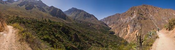 Canyon de Colca avec le chemin de trekking Photo stock