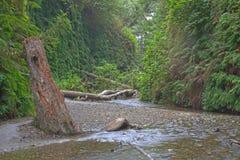 Canyon de fougère Image libre de droits