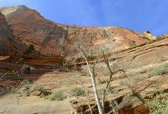 Canyon de roche et montagnes rouges, Zion National Park, Utah Images libres de droits
