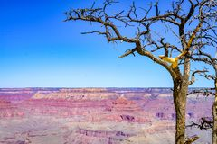 Canyon and a dead tree at grand canyon national park. Landscape at grand canyon national park with flat canyon and blue sky in September, with a big tree that is royalty free stock image
