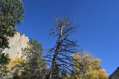 Canyon del Cimarron fotografia stock