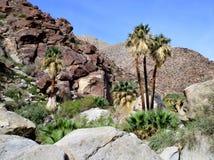 Canyon del deserto con le palme fotografia stock libera da diritti