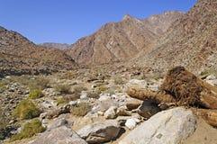 Canyon del deserto in primavera immagini stock libere da diritti