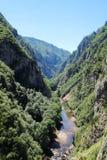 Canyon del fiume di Cesalpina, Montenegro Fotografie Stock Libere da Diritti