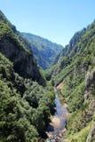 Canyon del fiume di Cesalpina, Montenegro Immagini Stock